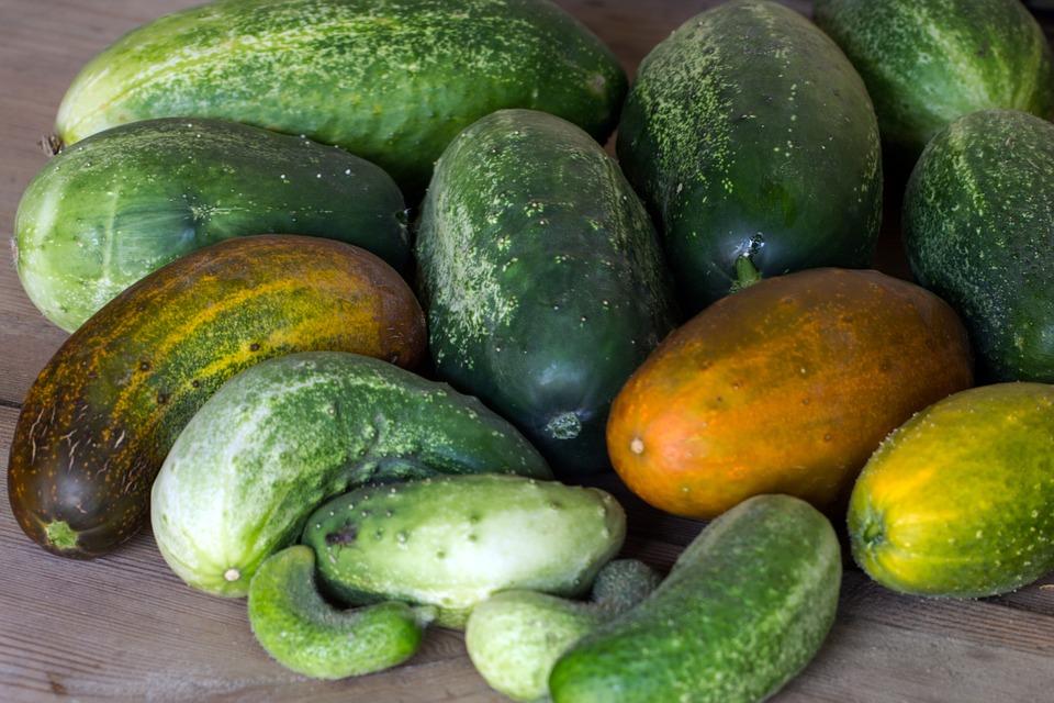 Cucumbers Vegetables Garden Cucumber